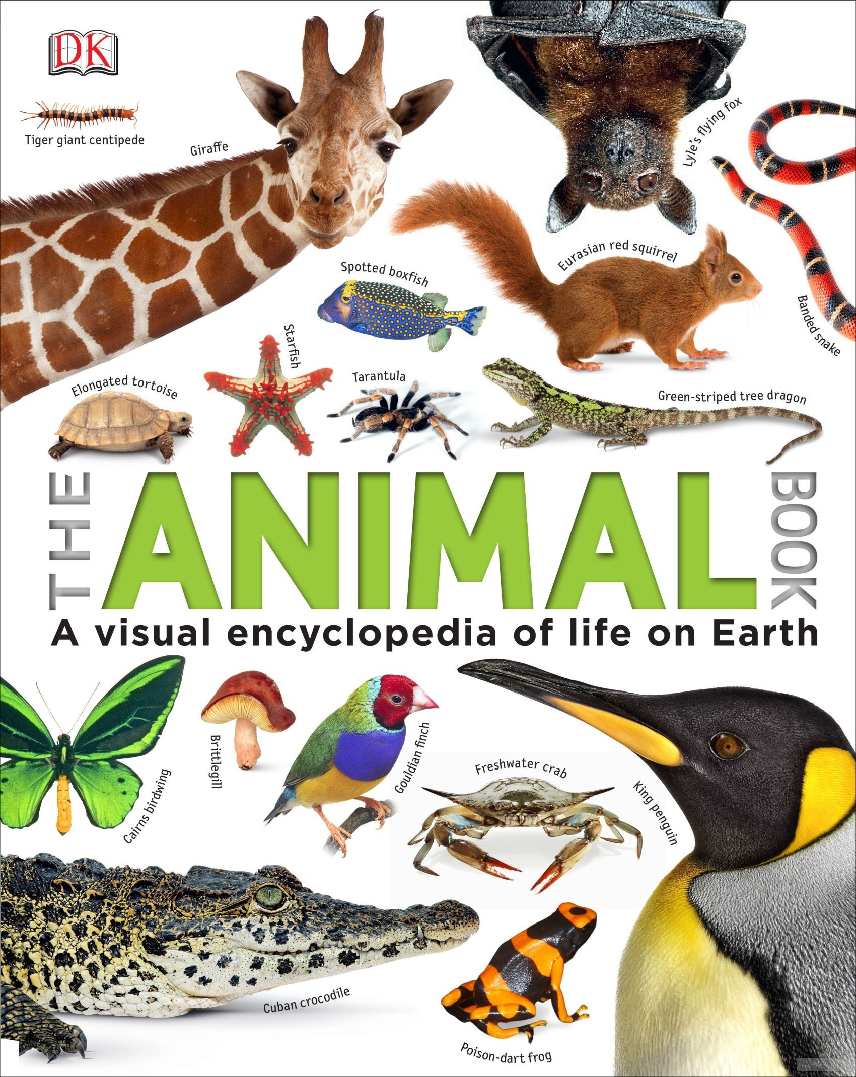 The Animal Book фото