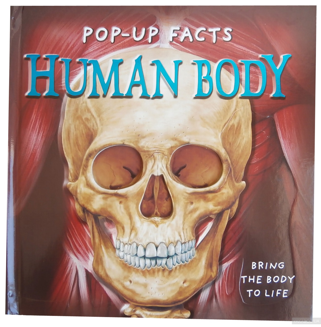 Pop-Up Facts. Human Body фото