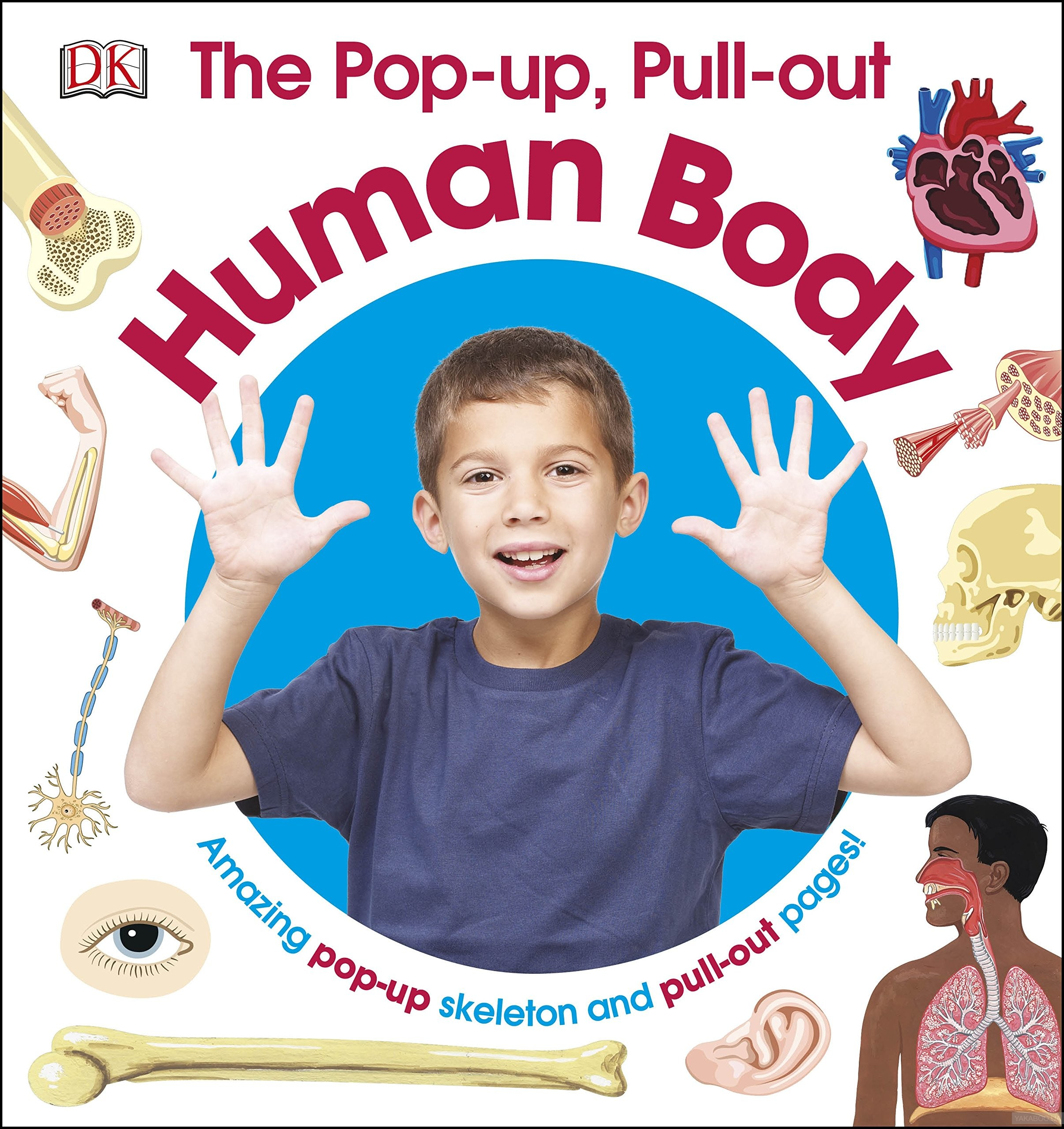 The Pop-Up, Pull Out Human Body